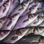 Сколько калорий в Рыбе и морепродуктах